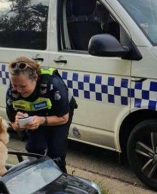 Buddy o cãozinho é abordado por policial australiana